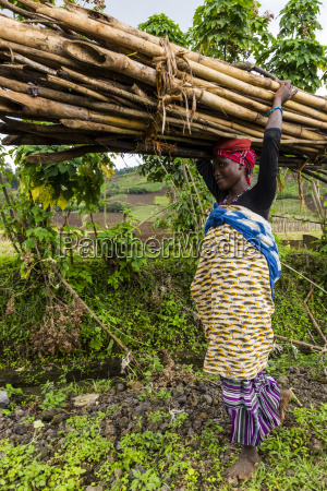 woman carrying firewood on her head