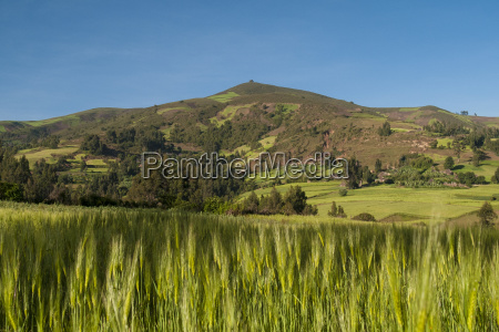 crops growing with backdrop of rolling