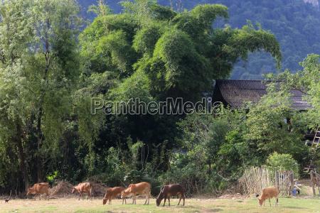 mountainsides in rural laos near the