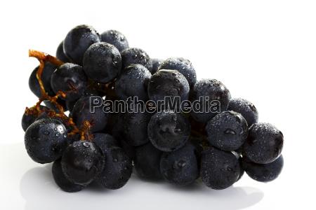 blue food aliment inside indoor photo